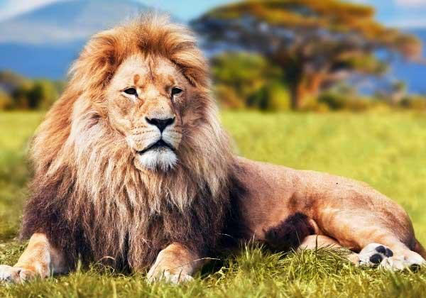Даты Льва по гороскопу