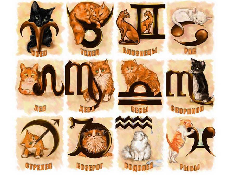 Гороскоп кошек по дате рождения