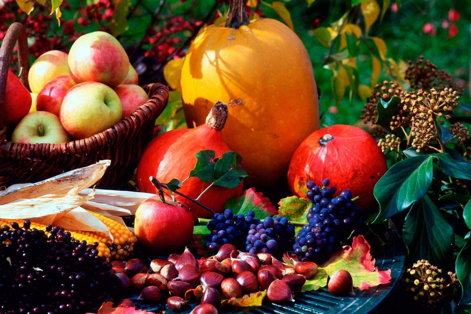 Лунный календарь садовода и огородника на ноябрь 2020