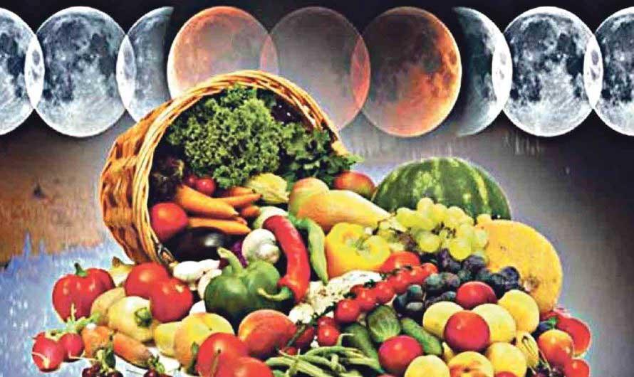 Лунный календарь садовода и огородника на декабрь 2020