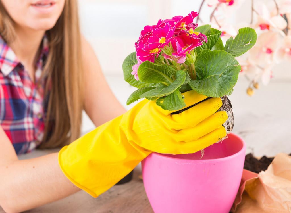 Благоприятные дни для пересадки комнатных растений в марте 2021