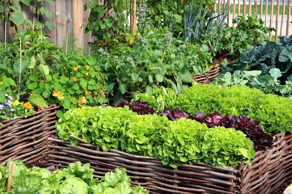 Лунный календарь садовода и огородника на февраль 2021