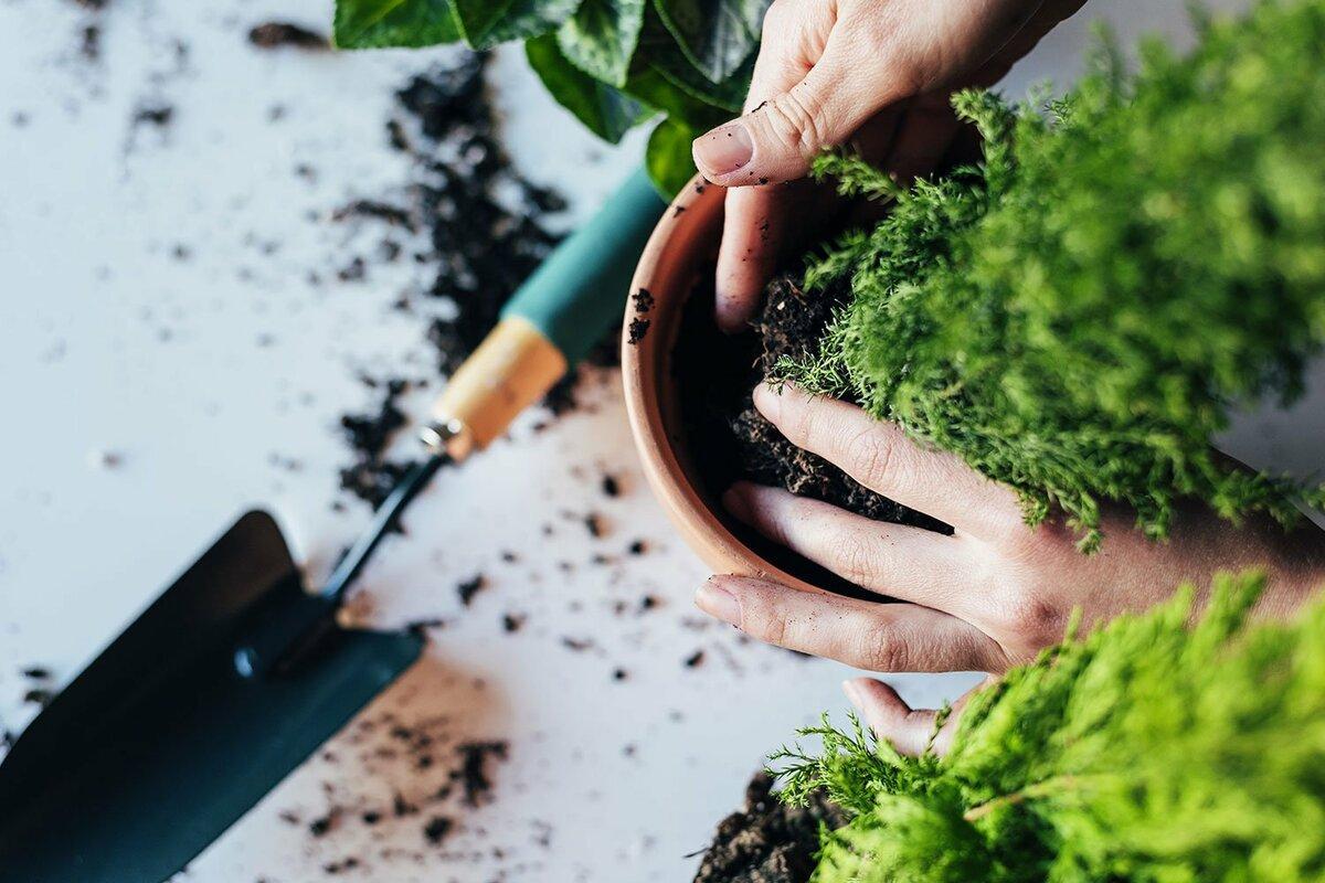 Благоприятные дни для пересадки комнатных растений в июне 2021