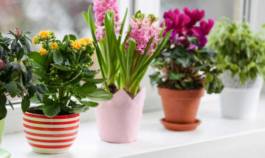 Благоприятные дни для пересадки комнатных растений в мае 2021