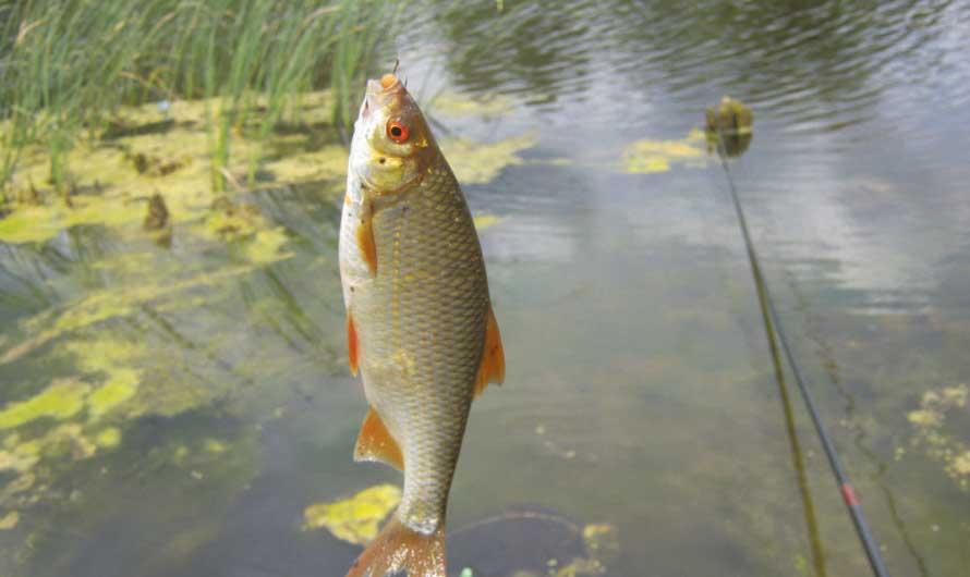 Благоприятные дни для рыбалки в июле 2021