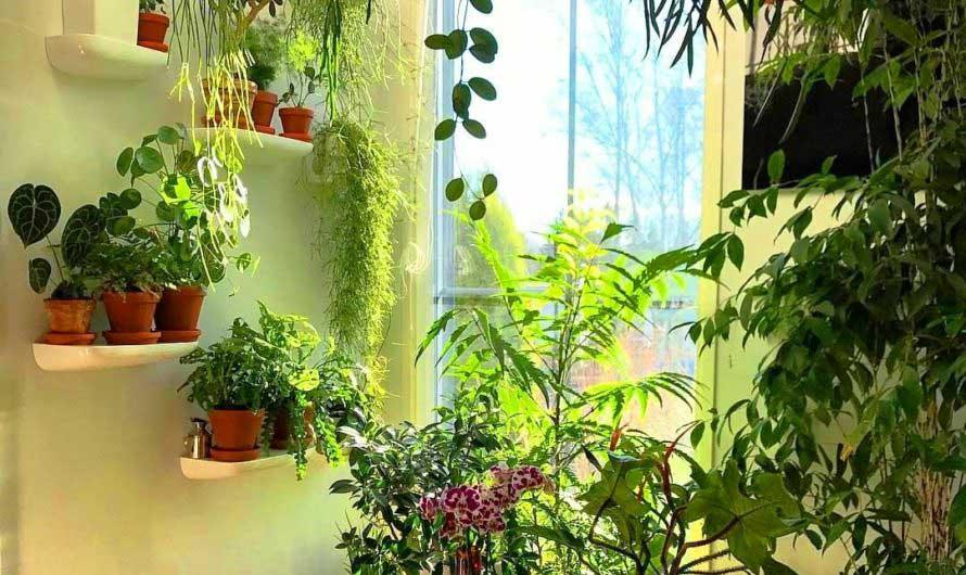 Благоприятные дни для пересадки комнатных растений в августе 2021
